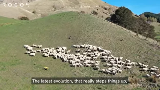 波士頓動力系列:Spot機器人新西蘭草原上放羊